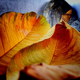 Dried leaves by Janette Ho - Instagram & Mobile iPhone