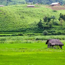 Farmer Rest House by Rishikesh Sharma - Landscapes Prairies, Meadows & Fields ( heirok paddy field manipur )