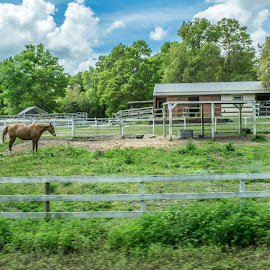 HORSE IN THE YARD by Mykel Cardinal-Janisch - Animals Horses ( ranch, animals, grass, horse, trees )