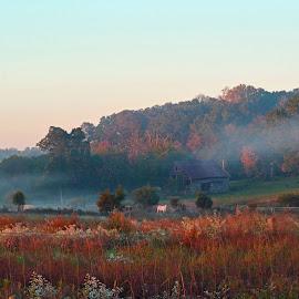Foggy Barn by Carolyn Parks - Landscapes Prairies, Meadows & Fields ( fog, fall, barns, morning, cows )