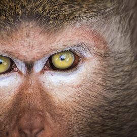 I SEE YOU by Andy Teoh - Animals Other Mammals ( macro, atp, monkey, animal, andyteoh photography )