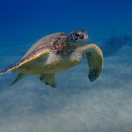 by Tatiana Gonnason - Animals Sea Creatures
