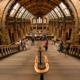 Museum of Natural History by Matthew Haines - Buildings & Architecture Public & Historical