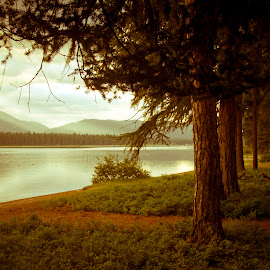 Magical Path by Beverly McGowan - Landscapes Forests ( pathway, montana, summer, forest, lake, scenic, sunrise, seeley lake,  )