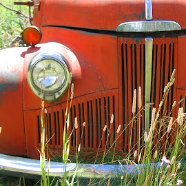 Retired Old Friend by Beverly McGowan - Transportation Automobiles ( red, truck, automobile, transportation, nostalgic, antique,  )