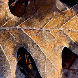 by Terry Herndon - Nature Up Close Leaves & Grasses