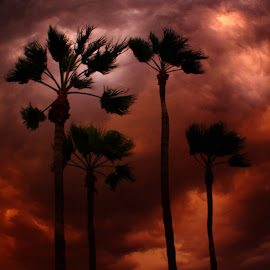 She's on Fire!  by Deb Bulger - Landscapes Cloud Formations ( clouds, red, nature, red skies, silhouette, weather, storms, palms, dusty )