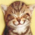 Tap Tap Kitty icon