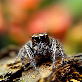 by Hendrata Yoga Surya - Instagram & Mobile Android ( jumping spider )
