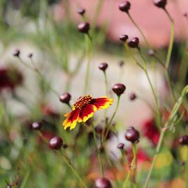 by Leo Surya Kumar - Nature Up Close Gardens & Produce