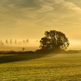 untitled by Zsolt Zsigmond - Landscapes Sunsets & Sunrises ( tree, shadow, sunrise, gold, morning, light )