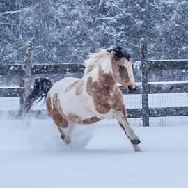 Casey by Nina Fuller - Animals Horses