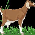 A-Z Animals Book icon