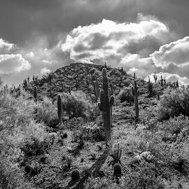 Desert Landscape by Joseph Martinez - Landscapes Deserts ( clouds, blackandwhite, desert, black and white, d5200, landscape photography, nikon, landscapes, landscape, cactus )