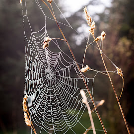by Larry Rogers - Nature Up Close Webs