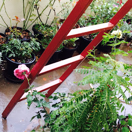 Shower power!  by Caroline Carol - Novices Only Flowers & Plants ( gardening )