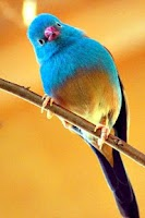 Screenshot of Singing Birds Live Wallapaper
