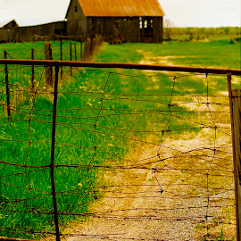 Thru the Gate by David W Hubbs - Landscapes Prairies, Meadows & Fields ( green field, pasture, rusted fence, barn, dirt path )