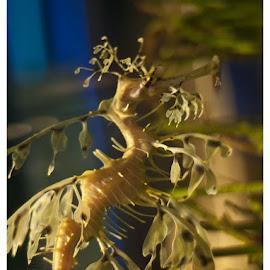 by Ife Ali - Animals Sea Creatures
