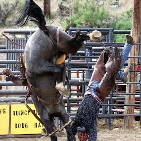 The cowboy handstand! by Brandi Nichols - Sports & Fitness Rodeo/Bull Riding ( horseback, montana, rodeo, rough stock, gardiner )