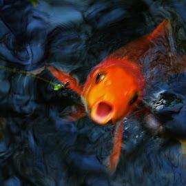 Hello! by Richard James - Animals Fish