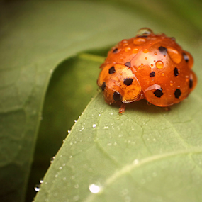 Alone here by Ngatmow Prawierow - Instagram & Mobile Other ( macro, bugs, indonesia, insects, nokian8, animal,  )
