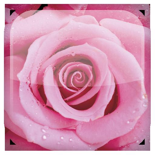 玫瑰花動態桌布 個人化 App LOGO-APP試玩