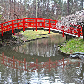 Red Bridge Reflection by Kathy Suttles - Buildings & Architecture Bridges & Suspended Structures ( white buds, red, oriental, bridge, spring,  )