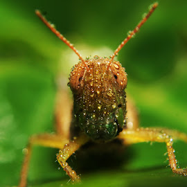 My name is  BELALANG  by Lutvi Rianto - Animals Insects & Spiders