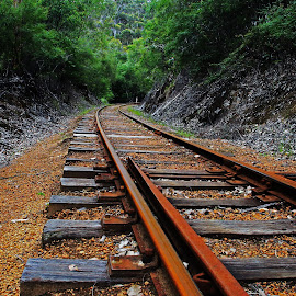 The track by Tasneemul Galib - Landscapes Forests ( pemberton, railway, australia, rail, track, forest, wa, tracks,  )