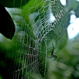 by Razone Wane - Nature Up Close Webs