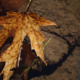 leaf in the river by Jody Rowe - Nature Up Close Leaves & Grasses ( water, 97, leaf, delaware river, river )