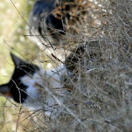 by Cheyanne Howlett - Animals - Cats Playing ( cat, black and white, distant, charlie, unfocused, weeds, cute )