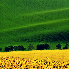 by Irena Brozova - Landscapes Prairies, Meadows & Fields ( green, yellow )