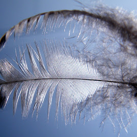 Sometime reflection are more prominent!!  by Tanmoy Ray - Abstract Patterns ( reflection, sky, glass, feathers, sunlight,  )