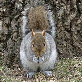 squirrel pudgy2.JPG