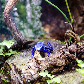 Poison Dart Frog? by Angelo Perrino - Animals Amphibians