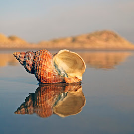 Shell Reflection by Eric Watson - Nature Up Close Other Natural Objects ( scotland.reflection, shell.beach,  )