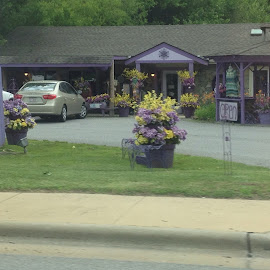Purple store by Terry Linton - City,  Street & Park  Markets & Shops