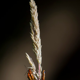 by Glenn Dourish - Nature Up Close Leaves & Grasses