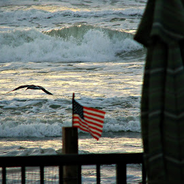 Freedom Rings by Valerie Bombino - Landscapes Beaches ( beach scene, birds flying on a beach, american flag, american flag on a beach, beach, freedom flag )