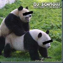 Panda+Love