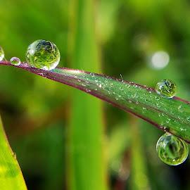 by Saefull Regina - Nature Up Close Natural Waterdrops (  )