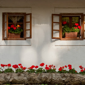 my holiday house by Alojz Vintar - Buildings & Architecture Homes ( window open, facade, tree, window, zoo, zanimiva, house, okno, flower )