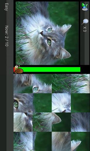 拼图游戏(高清)图集(可爱猫猫主题)
