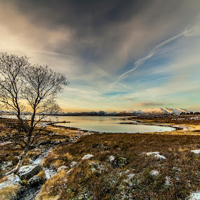 Tree at field by Benny Høynes - Landscapes Prairies, Meadows & Fields ( field, tree, grass, sunset, skies, colours, formation )