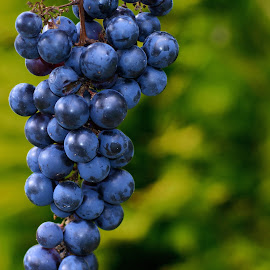 Grapes by Ad Spruijt - Food & Drink Fruits & Vegetables ( grapes, grape )
