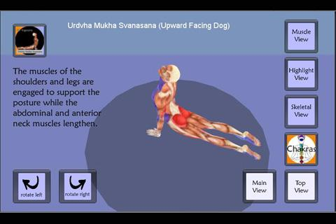 Yoga Asana : Updog