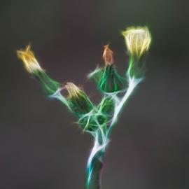 by Ricardo Xavier - Novices Only Macro ( photoshop art, macro, flower )