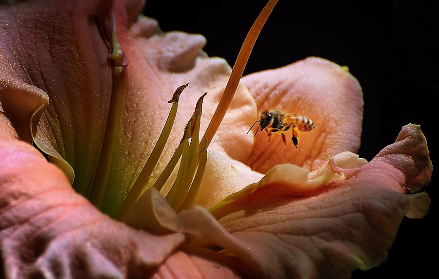 Morning Fare by Liz Crono - Flowers Flowers in the Wild ( bees, lilies, morning, flowers )